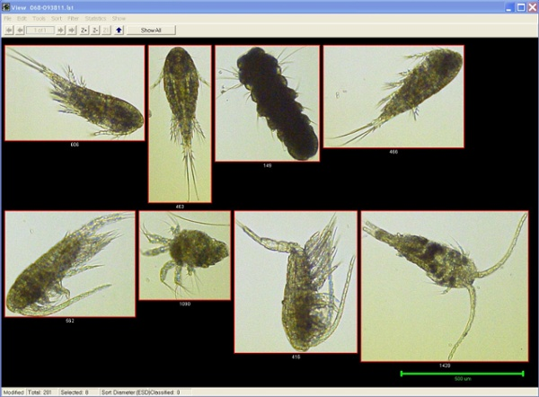 Zooplankton from the Baltic Sea