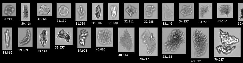 Biopharma FlowCam sample with glass lamination flakes-1